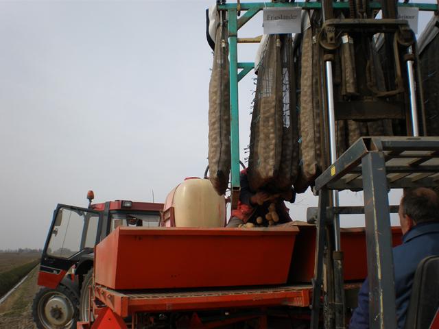 De kiemzakken worden geleegd in de pootmachine
