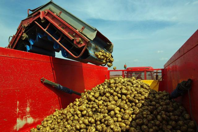 De aardappelen vallen heel voorzichting in de keeper